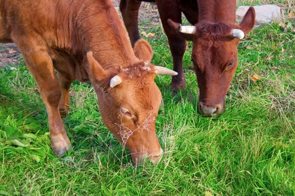 Tierhaarallergie und Nahrungsmittel-Intoleranzen